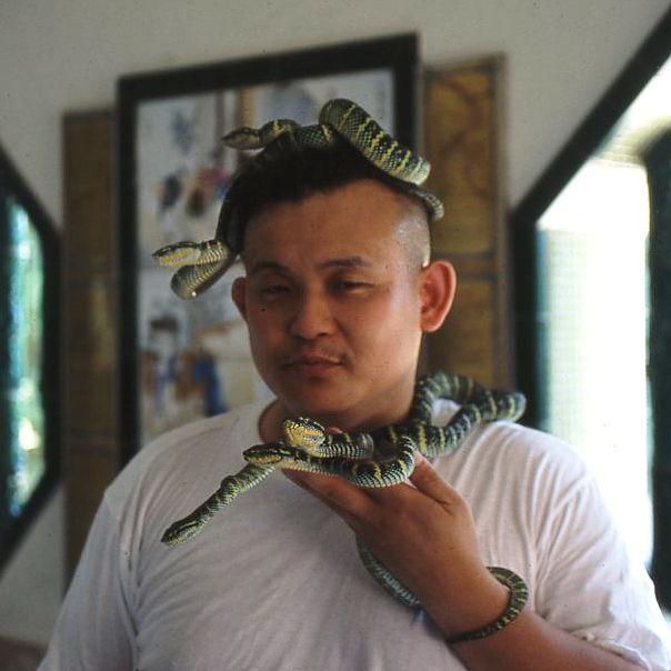 パンク町田20代 毒蛇ヨロイハブと