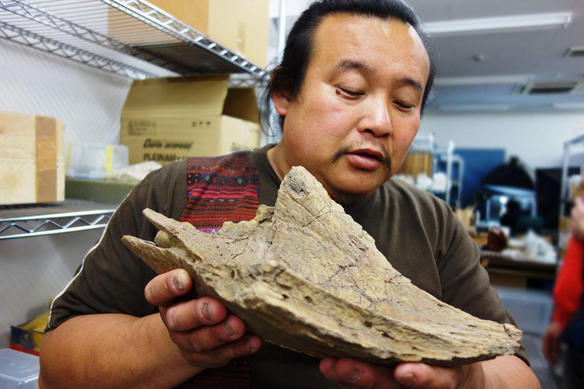 トリケラトプスの口先の化石と