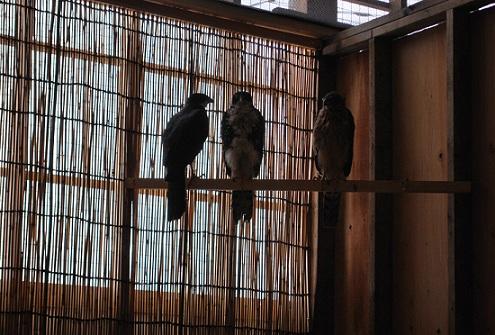 パンク町田プロデュース 希少鳥類繁殖場がOPENです!イメージ2