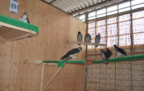 パンク町田プロデュース 希少鳥類繁殖場がOPENです!イメージ3