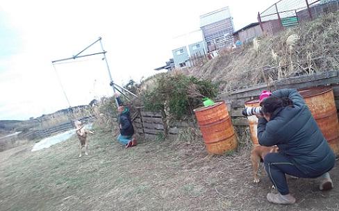 パンク町田考案♪ワンちゃんの、ぶら下がり健康器具ドッグハンガー!イメージ3