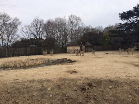 東武動物公園にて撮影でしたイメージ3