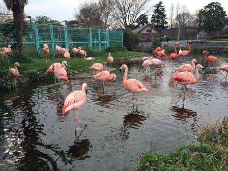東武動物公園にて撮影でしたイメージ4