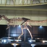獣舎、各種檻、骨格・化石ディスプレイスタンドの製作。イメージ1