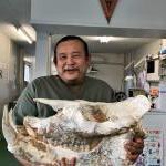 Chilotherium の頭骨化石を手に入れイメージ
