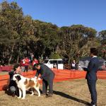 特定非営利活動法人日本社会福祉愛犬協会 /KCジャパンイメージ2