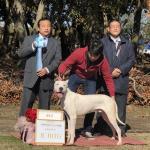 特定非営利活動法人日本社会福祉愛犬協会 /KCジャパンイメージ1