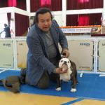 急遽、韓国のドッグショー視察に行って参りました。