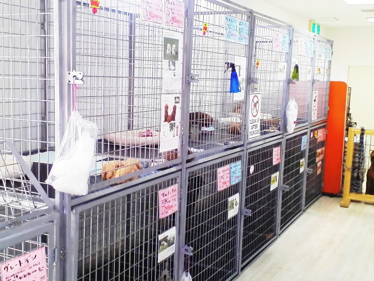 犬舎、檻の製作