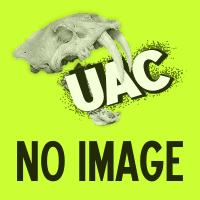 今年より活動しておりますNPO法人生物行動進化研究センターのウェブサイトを一部公開しました。イメージ